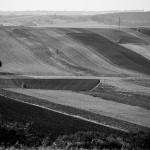 Jesienne pola, fot. Piotr Kubic