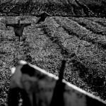 Strach na wróble, fot. Piotr Kubic